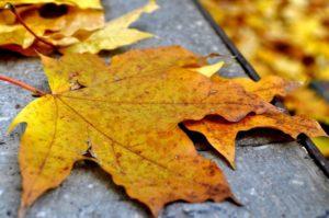 Canton November Events